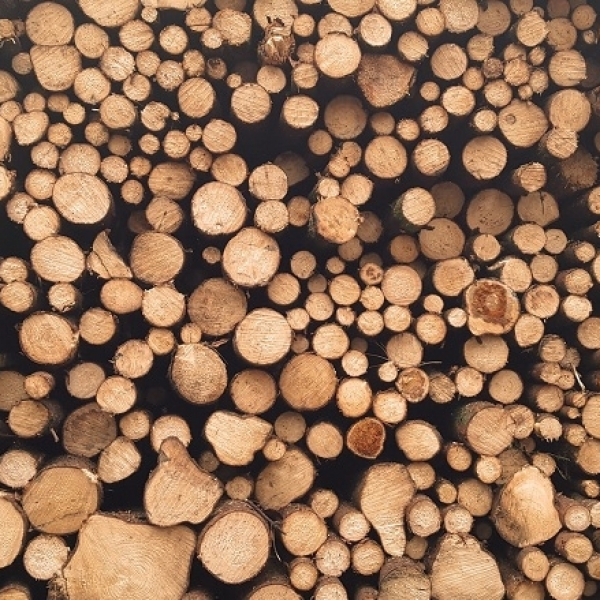 Why does timber have a negative carbon footprint?